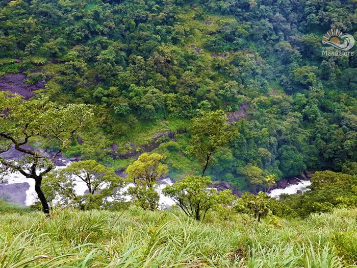 Mallalli Falls 1 - Mallalli Falls