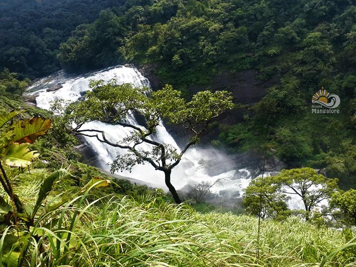Mallalli Falls 5 - Mallalli Falls