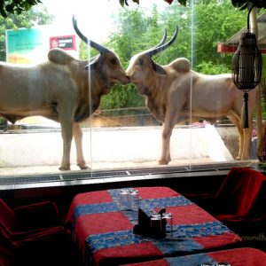 Maharaja Restaurant - Near Jyothi Circle, Mangalore