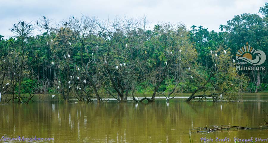 Mandagadde Bird Sanctuary – Shimoga
